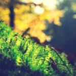 7 spirituelle Alltagshelfer für mehr Fülle in Deinem Leben